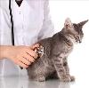 Ветеринарные клиники в Муханово